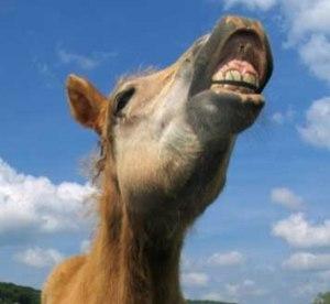 rire_cheval